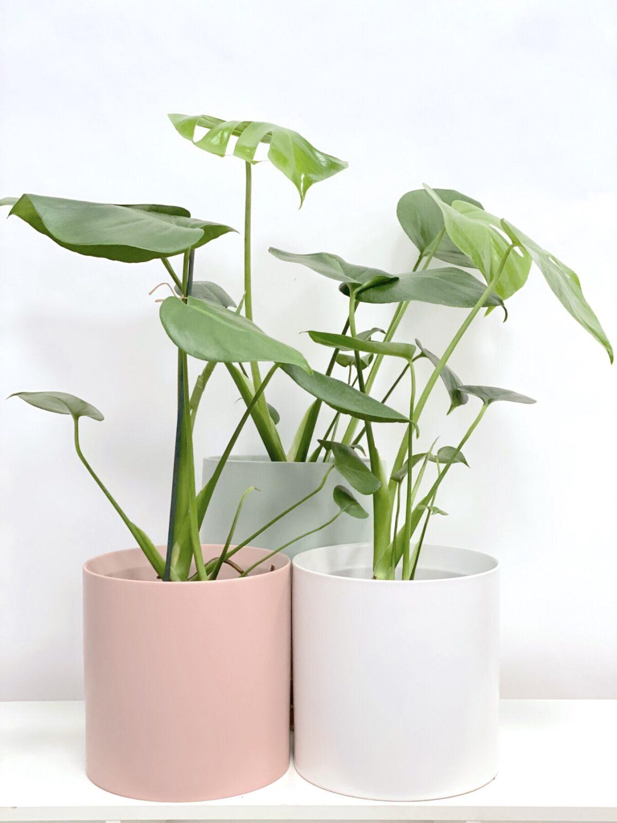Plants: Energy | Order Online Flower Delivery Melbourne, Thrive Flowers